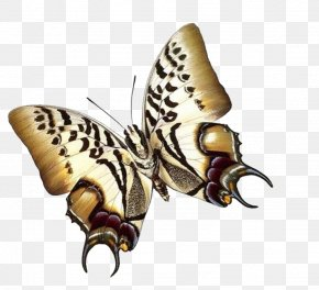 Butterfly - Papillon Dog Butterfly Insect Paper Moth PNG
