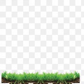 Lawn Grass Pattern - Grass Lawn Clip Art PNG