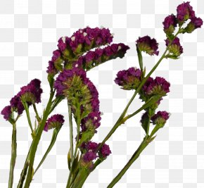 Spring Flowers - Plant French Lavender Violet Cut Flowers Herb PNG
