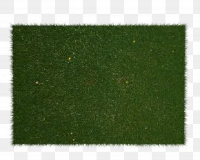 Field - Lawn Artificial Turf Plant Shrub Rectangle PNG