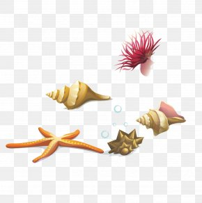 Vector Conch Starfish Seaweed - Seashell Euclidean Vector Sea Snail PNG