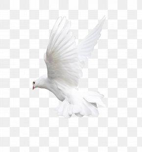 White Flying Pigeon Image - Bird Flight Owl Beak PNG