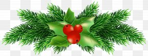 Christmas Holly Pine Clip Art Image - Holly Clip Art PNG