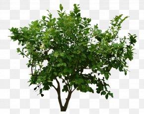Bushes Picture - Flowerpot Jeb Bush Presidential Campaign, 2016 CASAMI Shrub Nature Reserve PNG