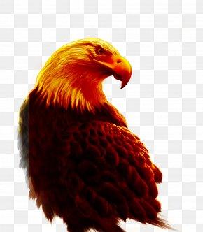 Eagle - Eagle Bird Hawk PNG