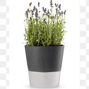 Watering Pot - Flowerpot Watering Cans Vase Glass Garden PNG
