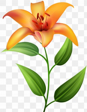 Orange Lilium Transparent Clip Art - Icon Clip Art PNG