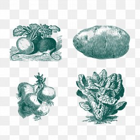 Vegetable Sketch - Vegetable Euclidean Vector PNG