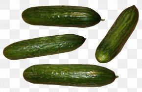 Cucumber - Sushi Slicing Cucumber Spreewald Gherkins Pickled Cucumber PNG