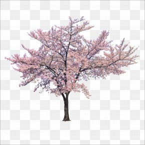 Trees - Tree Cherry Blossom Branch PNG