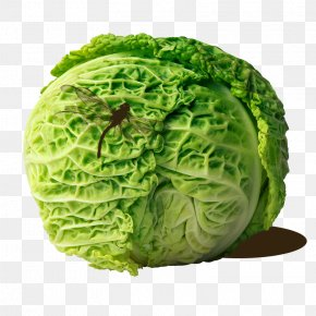 Cabbage Cabbage Cabbage - Cabbage Roll Coleslaw Savoy Cabbage PNG