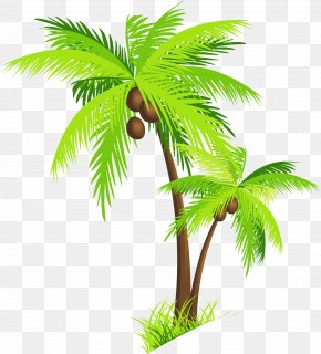 Palm Tree With Coconuts Clipart Picture - Arecaceae Coconut Clip Art PNG