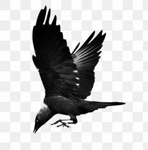 Flying Raven - Bird Common Raven Hooded Crow Western Jackdaw PNG