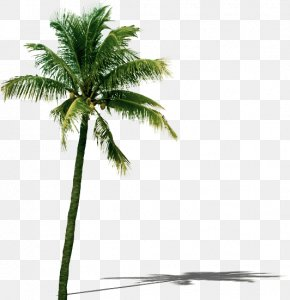 Coconut Tree - Coconut Tree Leaf PNG