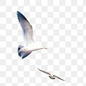 Seagull - Icon PNG
