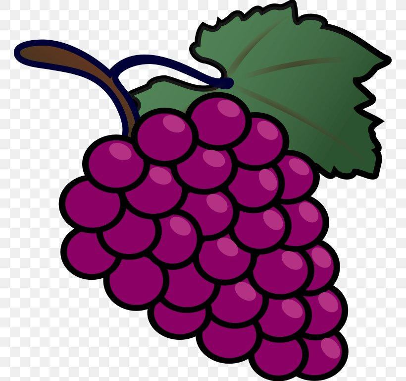 Common Grape Vine Drawing Clip Art, PNG, 764x768px, Common ...
