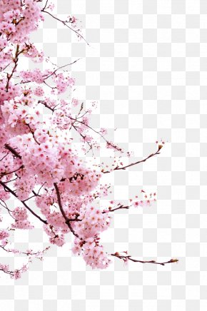 Pink Cherry Branches Decoration - Cherry Blossom Cerasus Icon PNG
