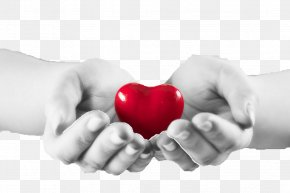 Love Heart - Health Care Stock Photography Heart Health, Fitness And Wellness PNG