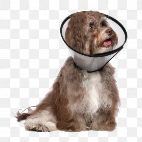Dog With Collar - Dog Breed Havanese Dog Dobermann Companion Dog Malinois Dog PNG