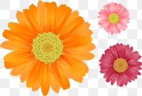 Gerbera - Flower Common Daisy Clip Art PNG