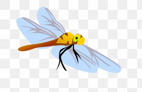 Vector Dragonfly - Dragonfly Honey Bee Insect Euclidean Vector PNG
