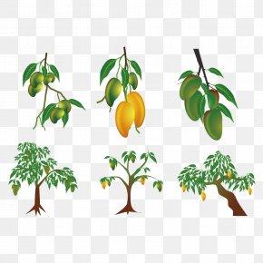 Vector Mango Tree Results - Mango Euclidean Vector Clip Art PNG