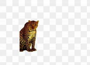 Cheetah - Leopard Cheetah Felinae PNG