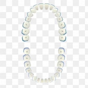 Hand Painted White Teeth - Tooth White Euclidean Vector PNG