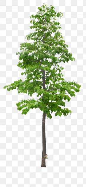 Green - Tree PNG