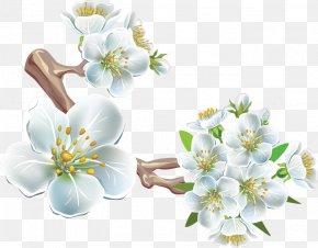 White Pear - Flower PhotoScape Clip Art PNG