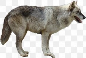 Dog - Dog The Arctic Wolf Clip Art PNG
