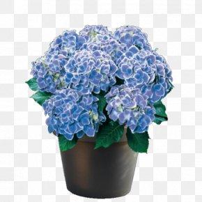 Hydrangea - Flower Panicled Hydrangea French Hydrangea Oakleaf Hydrangea Plant PNG