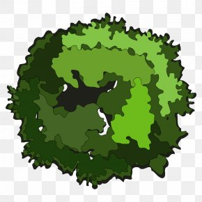 Tree Top View - Tree Stock Photography Clip Art PNG