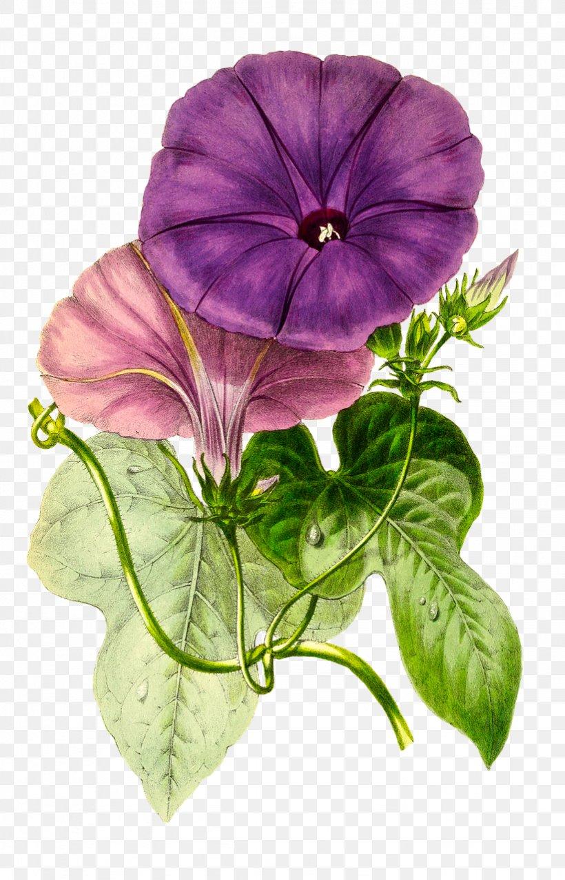 Flower Floral Design Passiflora Vitifolia Png 821x1280px Flower