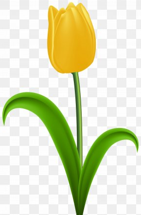 Yellow Tulip Transparent Clip Art - Tulip Yellow Flower Clip Art PNG