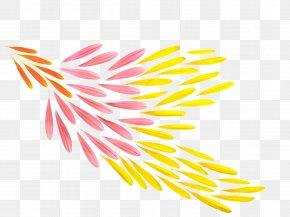 Chrysanthemum Petals - Petal Flower Orange PNG