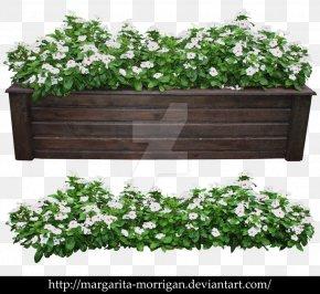 Flower Pot - Modern Shrub Rose Flowerpot Plant Tree PNG