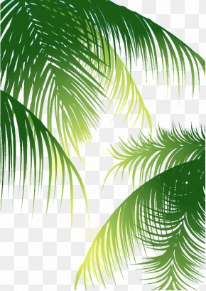 Green Palm Leaves Background - Coconut Arecaceae Euclidean Vector PNG