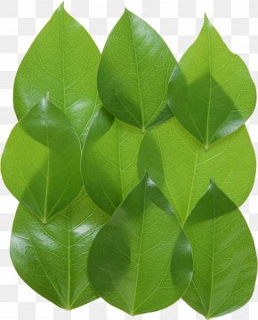 Green Leaves Picture - 2017 Nissan LEAF Clip Art PNG
