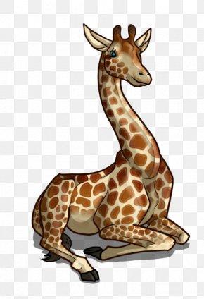 Giraffe - Giraffe Drawing Mammal Koala Sketch PNG