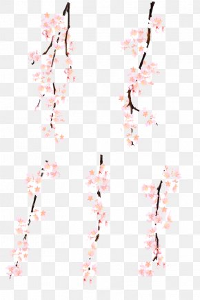 Cherry Blossoms - Pink Cherry Blossom Watercolor Painting PNG