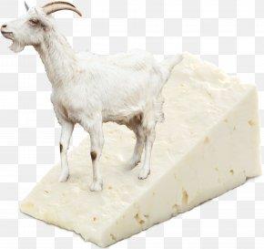 Goat - Goat Antelope Caprinae Livestock Animal PNG