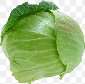 Cabbage - Savoy Cabbage Cauliflower Coleslaw Vegetable PNG
