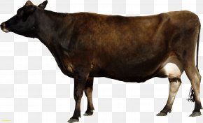 Clarabelle Cow - Texas Longhorn Bull Dairy Cattle PNG