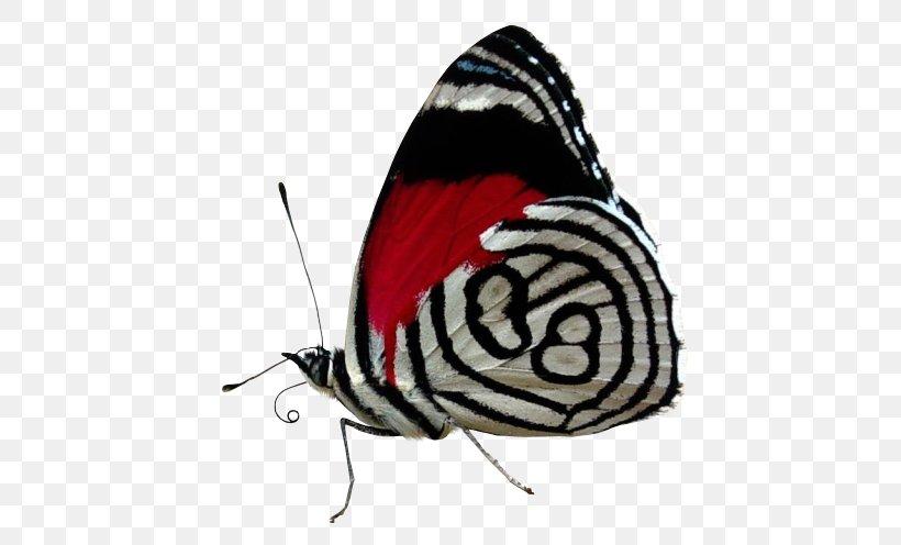 Desktop Wallpaper Color Butterfly Black And White Png 474x496px Color Arthropod Black Black And White Blue