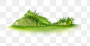 Grass - Clip Art PNG
