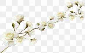 White Flower Pattern - Flower PNG