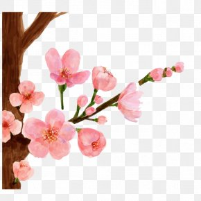 Drawing Peach - Cherry Blossom Watercolor Painting Spring Peach Blossom PNG
