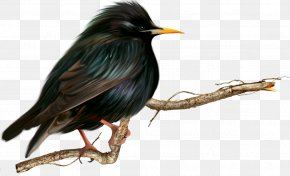 Birds - Beak Fauna PNG