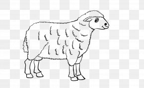 Sheep - Sheep Cattle Goat Line Art Drawing PNG